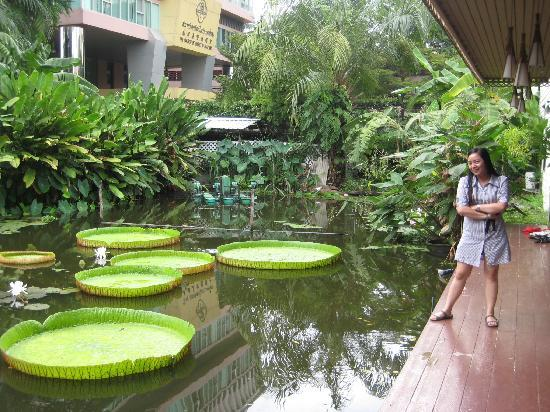 The Old Charm Hostel: me posing by the pond :)