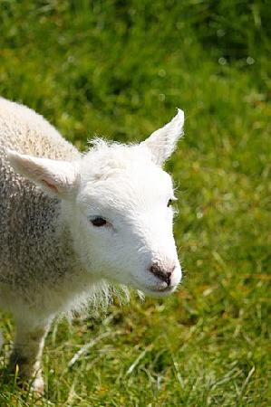 Waitomo Farmstay : Lamb