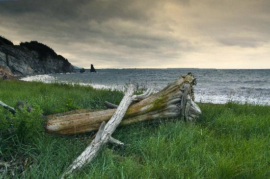 Canada : Alma: Fundy National Park