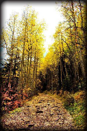 Bear Creek Lodge: Bear Creek Trail in early october