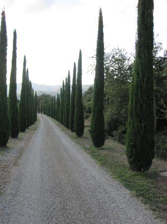 Casa Portagioia: Looking down the drive