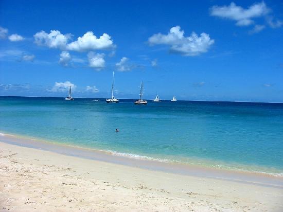 Bougainvillea Barbados Sandy Lane Beach