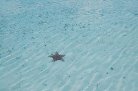 Paradise Bay Bahamas: etoile de mer