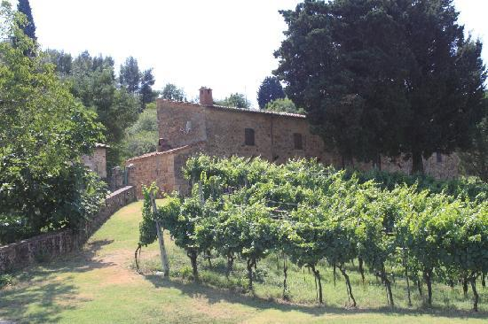 Agriturismo Fonte Martino: The farm seen from the pool