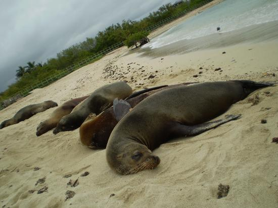 Finch Bay Galapagos Hotel: Finch Bay Private Beach, morning welcome!