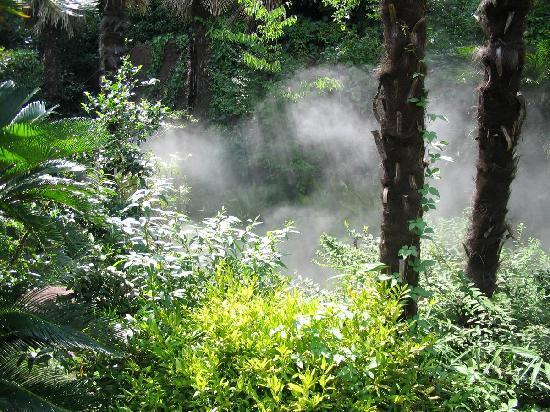 Yokohama Zoo ''Zoorasia'': 突然霧が漂って来ました