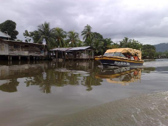 Tripadvisor Bocas Del Toro Panama: Bocas Town Is Bogas Town For Me.