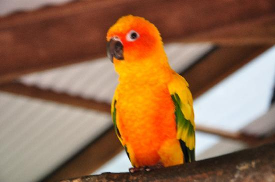 Kuranda, Australia: A bright orange bird