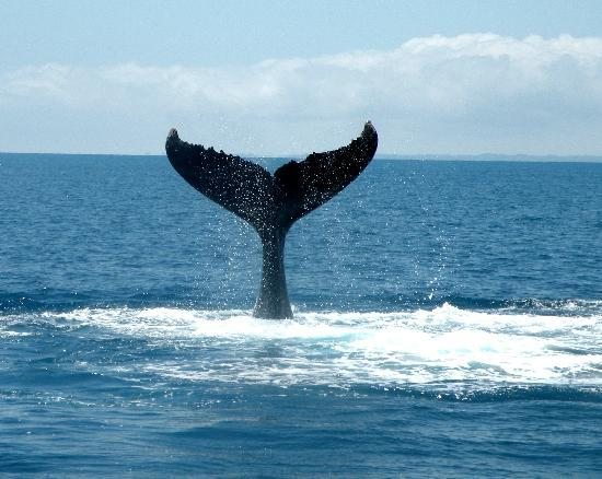 Freedom Whale Watch: whale tail