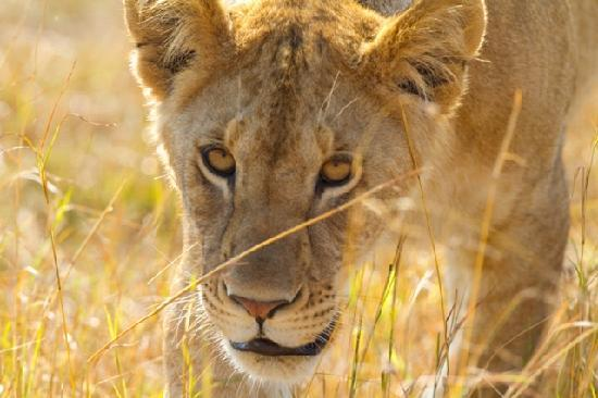 Entim Camp: Lions on the move