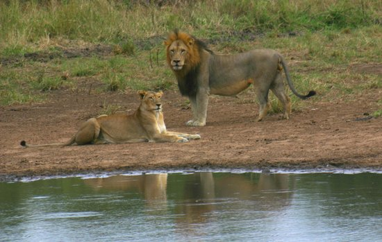 Vido Afrique du sud diaporama des animaux du parc