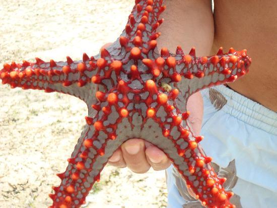 Jacaranda Beach Resort: stella marina