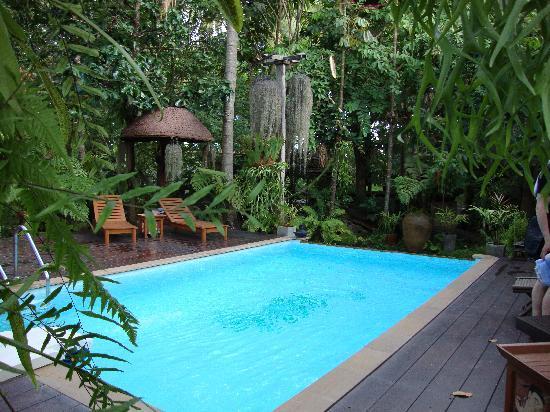 Fern Paradise : Beautiful pool