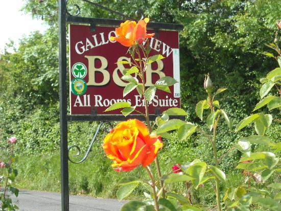 Gallows View: Sign for the B&B and some of Mary's flowers