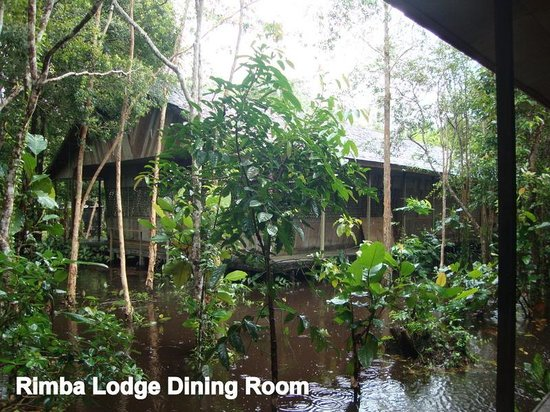 Rimba Orangutan Eco Lodge: The Ambience