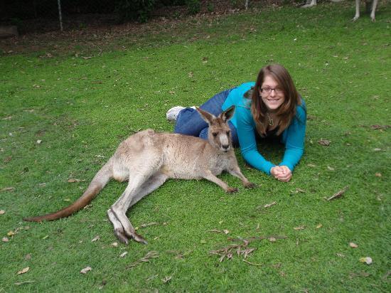 Lone Pine Koala Sanctuary: The kangaroo area