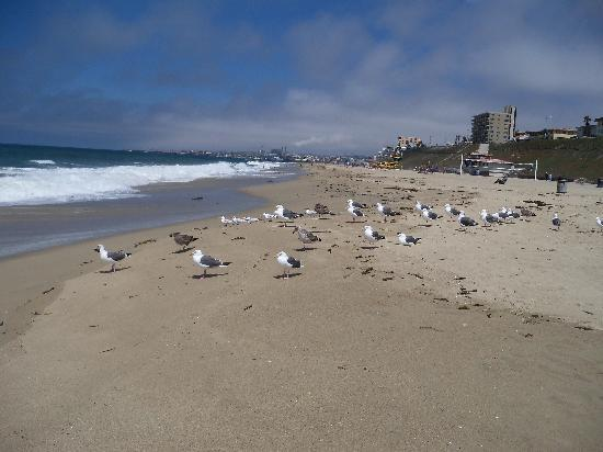 Days Inn Torrance Redondo Beach : BEACH JUST 2 MILES FROM HOTEL