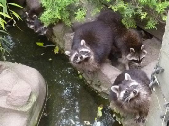 Varosliget : Budapest Zoo