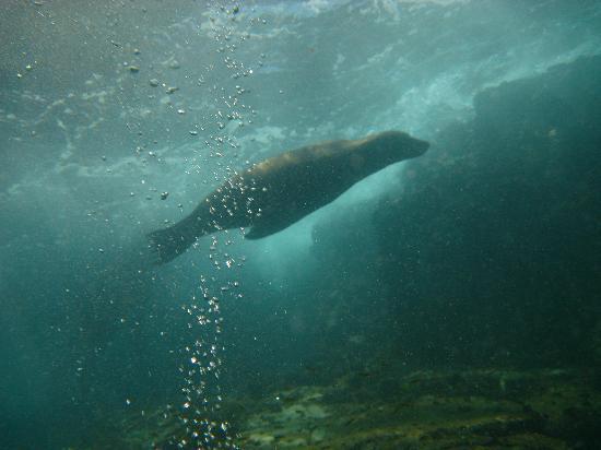 Cabo San Lucas, Mexico: Scuba diving with seal lions!