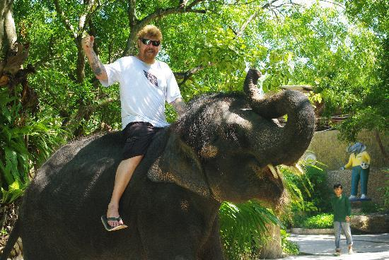 P.72 Hotel: phuket zoo