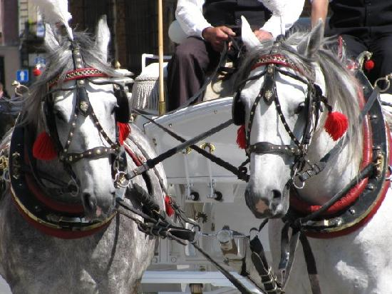 Cracovia, Polonia: Horse & Carriage