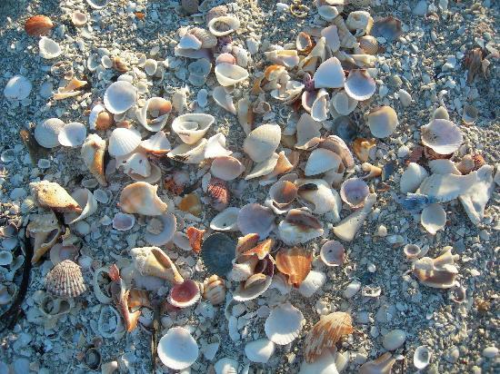 Sunset Beach Inn: Just a few of the thousands of shells