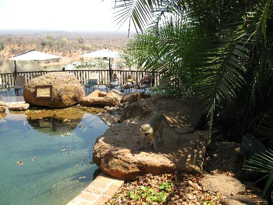 Водопад Виктория, Зимбабве: Victoria Falls Safari Lodge Pool