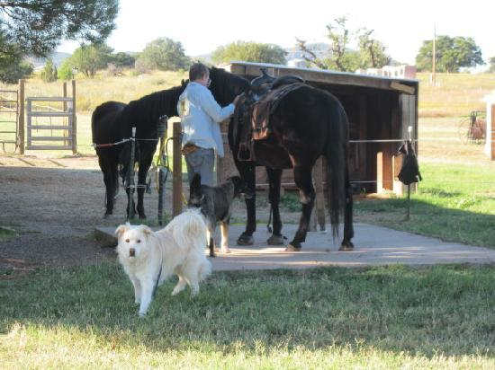 Xanadu Ranch GetAway / Private Guest Rooms / Guest Ranch & Horse Motel : Scratch, Bernie and the horses