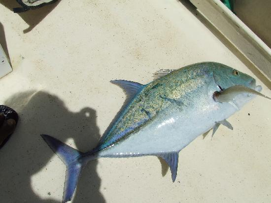 Sport Fishing Fiji: one tasty Trevally