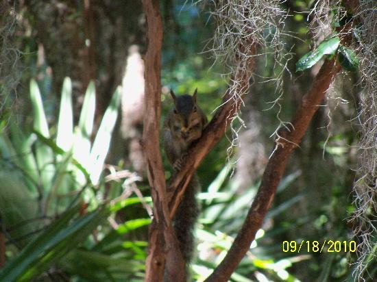Jekyll Island Campground : squirrels at the bird sanctuary
