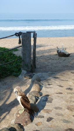 Hacienda Eden: Blue-footed booby wanders into the hotel