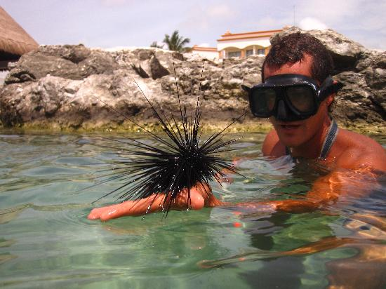 Heaven at the Hard Rock Hotel Riviera Maya: Tour guide on snorkel tour at resort