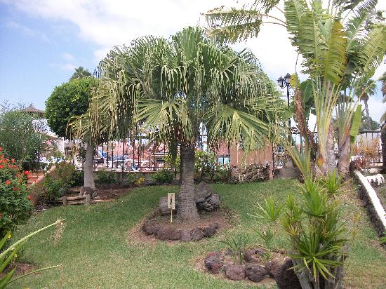 Gardens picture of jardin del sol apartments playa del - Playa del ingles jardin del sol ...