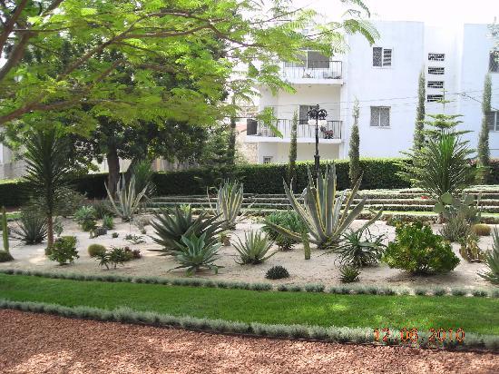 Jardines de Baha'i y Domo Dorado: cactus garden