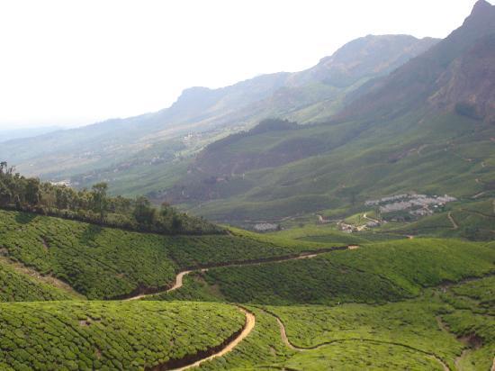 Муннар, Индия: Munnar Tea Plantations
