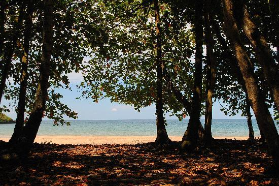 Physis Caribbean Bed & Breakfast: path to the beach