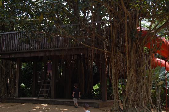 Tree house photo de jardin botanique de singapour for Au jardin les amis singapore botanic gardens