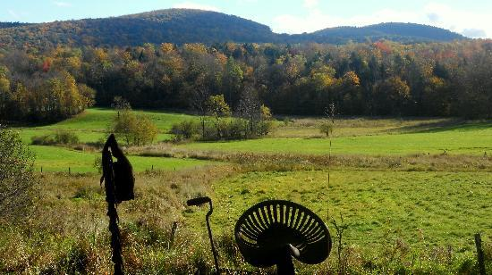 Inn At Buck Hollow Farm: View from B&B