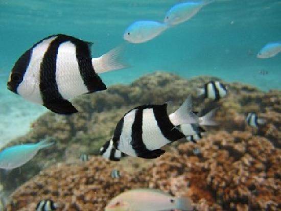 Tumon, Mariany: イパオビーチの熱帯魚