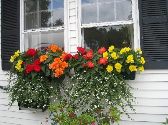 The Central House: Beautiful Flowers in Bar Harbor