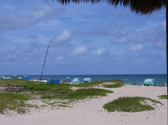 SeaSpray Inn Beach Resort : View of the beach from Sea Spray Inn
