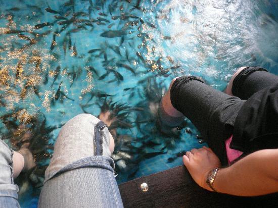 Foot Master Fish Spa : 群がる魚たち