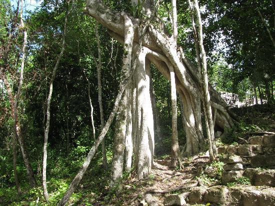 Restaurant y Hotel Calakmul: Vegetation in Calakmul