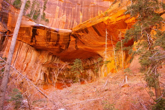 Taylor Creek Zion National Park 2019 All You Need To