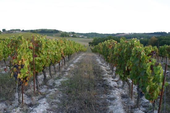 Chateau de Mayragues: walking through vineyards