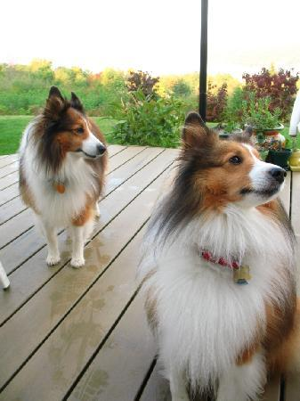 Shetland Meadows: Owners' dogs - well-behaved and adorable