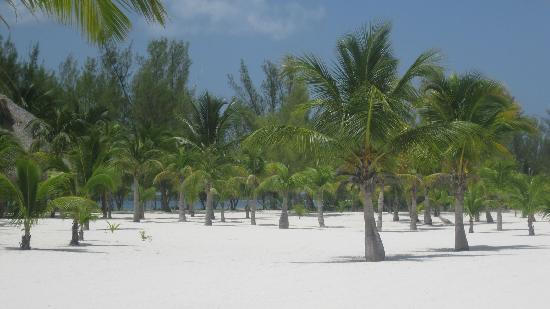 Isla de Pasion: Palm trees