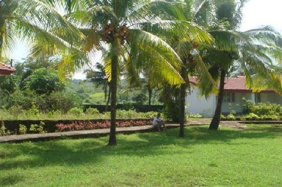 Krishnali Beach Resort : Cottage