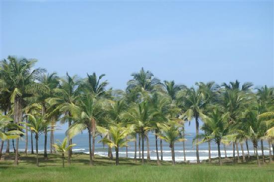 Krishnali Beach Resort : View from Restaurant