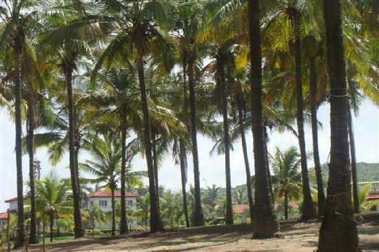 Krishnali Beach Resort: View of Bunglow